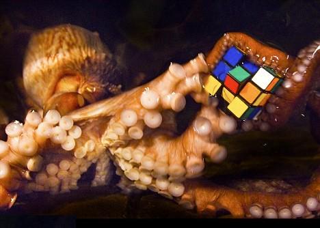 octopus-rubiks