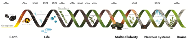 timeline-evolutionary-transitions-in-cognition